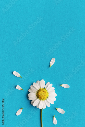 Foto op Canvas Madeliefjes Daisy on a blue background