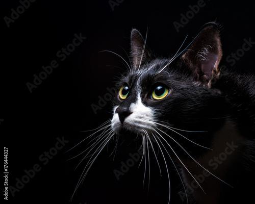 Captivated Fototapeta