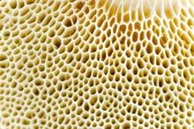 Mushroom Macro Spawn Detail