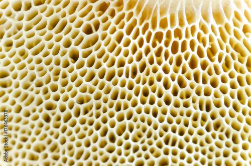 Fotobehang Macrofotografie Mushroom macro spawn detail