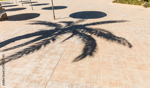 Poster Tunesië The palm shadows on the pavement
