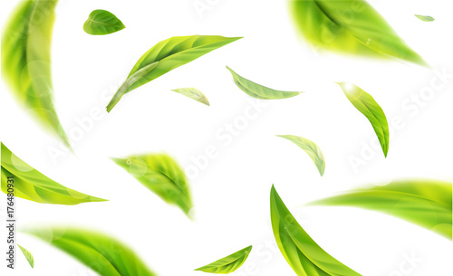 Obraz Vector 3d illustration with green tea leaves in motion on a white background. Element for design, advertising, packaging of tea products - fototapety do salonu