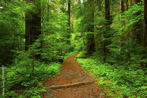 Plakat zdjęcie szlaku lasu północno-zachodniego Pacyfiku