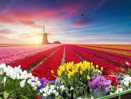 tradycyjne-holenderskie-holenderskie-holenderskie-dekoracje-z