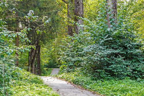 Foto op Canvas Pistache Path in the forest or park. Tree alley