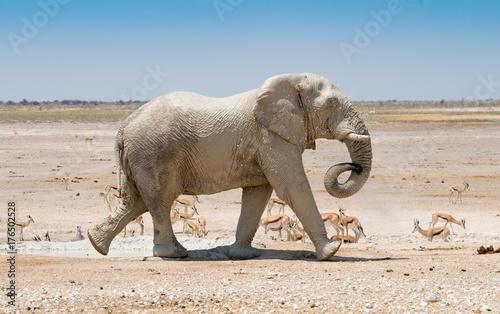 Staande foto Olifant ein Elefant nimmt ein Schlammbad an einem Wasserloch im Etosha Nationalpark, Namibia