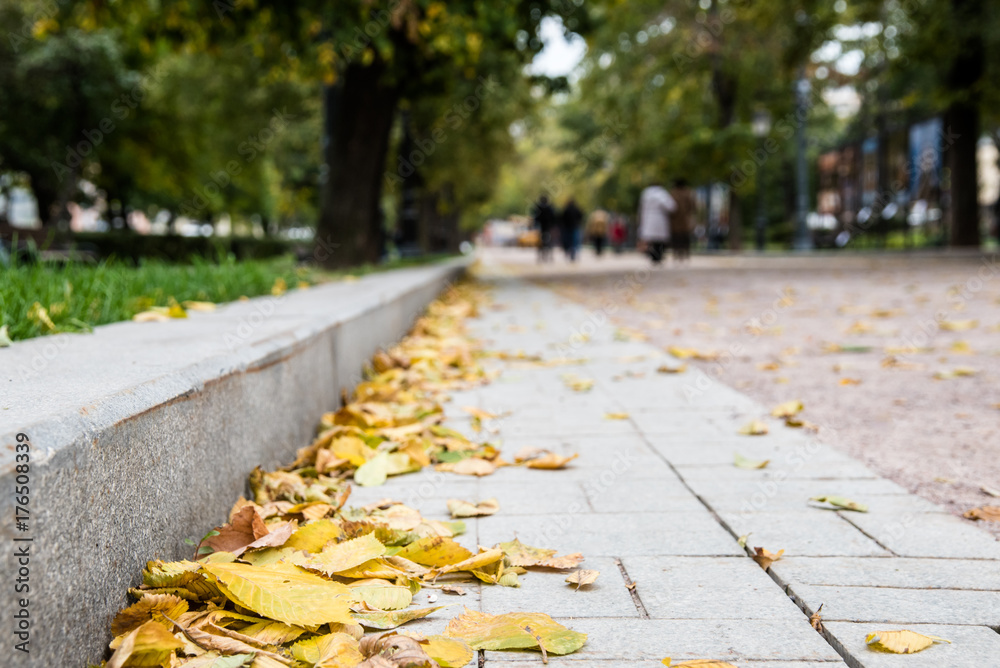 Fototapeta Yellow autumn foliage at the stone curb of a street