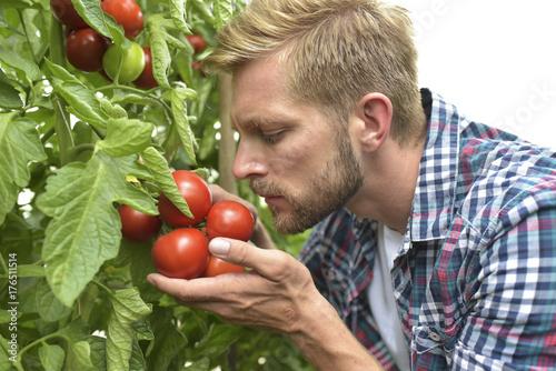 Gärtner in einem Gewächshaus mit tomatenpflanzen - Anbau von Gemüse
