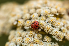 The Ladybird Sits On Top Of Th...