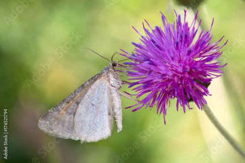 Obraz na plátně  Macrophotographie de papillon -