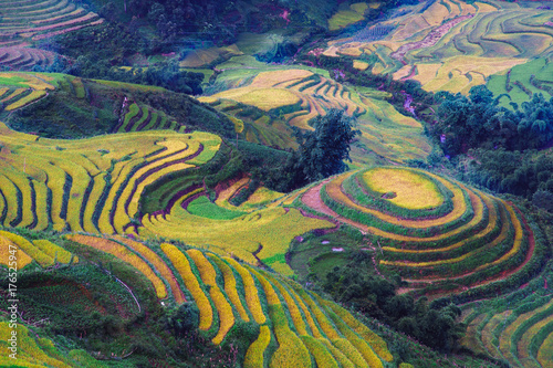 Poster Rijstvelden Explore the natural beauty of Northwest Vietnam. Terrace field with the different type of seeds makes a beautiful colorful picture.