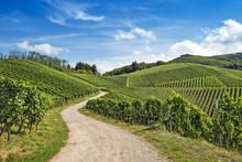 Curved Path In Vineyard Landsc...