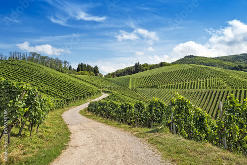 Stickers pour porte Colline Curved path in vineyard landscape