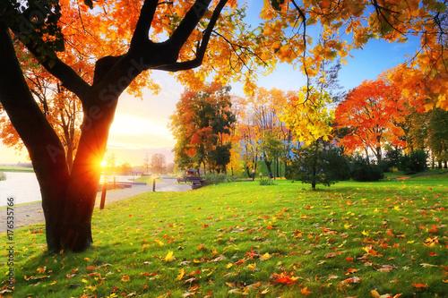 Aluminium Prints Autumn Fall scene theme