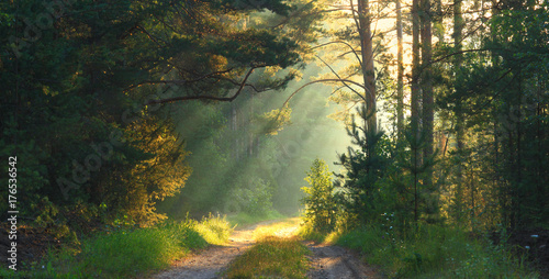Photo sur Aluminium Foret Summer scene concept