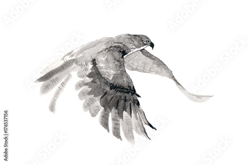 Платно The flying falcon. Ink drawing.