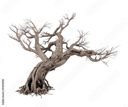 Dead tree isolated on white background, 3D rendering Fototapete
