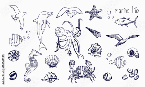 Photo  Sea creatures isolated on white background