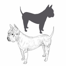 Chongqing Dog Hand Drawn Sketch. Dog Silhouette Isolated On White Background.