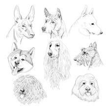 Purebred Dog Sketch Portraits. Hand Drawn Dog Collection Isolated On White Background.