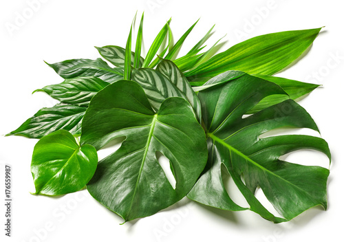 various tropical leaves