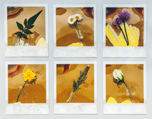 Rows Of Burned Out Expired  Photos With Flowers And Herbs Taped To Them
