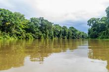 River In Tortuguero National P...