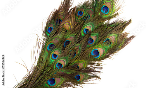 Foto op Plexiglas Pauw colorful peacock feathers isolated on white background