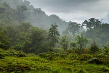 Jungle Near Boquete During Heavy Rain, Panama