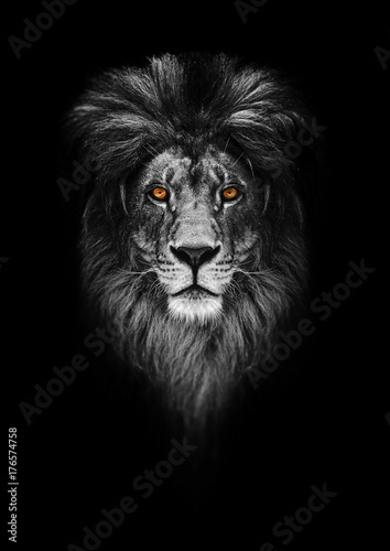 Staande foto Afrika Portrait of a Beautiful lion, lion in dark