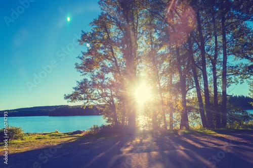 Fototapeta Lakeshore z drzewami przy zmierzchem. Piękna przyroda Finlandia