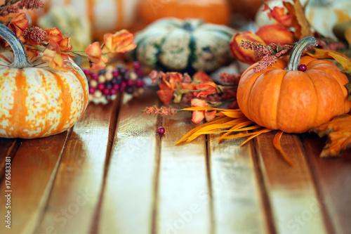 Juliste  Autumn pumpkin background