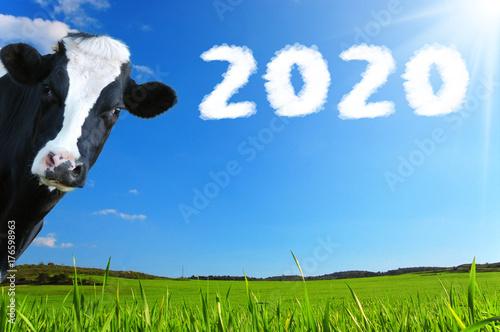 Photo Stands Cow Auguri di Buon Anno con mucca che guarda e panorama con prateria e raggi di sole