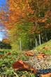 Herbst - Allgäu - Weg - Wandern - Spaziergang - verfärbt - Laub - Blätter