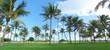 Palm tree panorama from Miami Beach, Florida, USA.