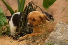 Photo Of A Pair Of Feral Puppi...
