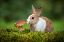 Little Rabbit With A Mushroom ...