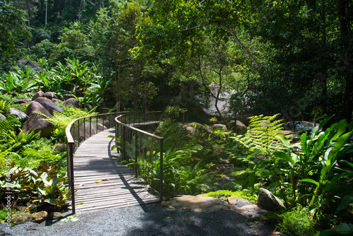 Tuinposter Weg in bos Wooden bridge path in to forest and stream, walking way in Chiangmai, Thailand