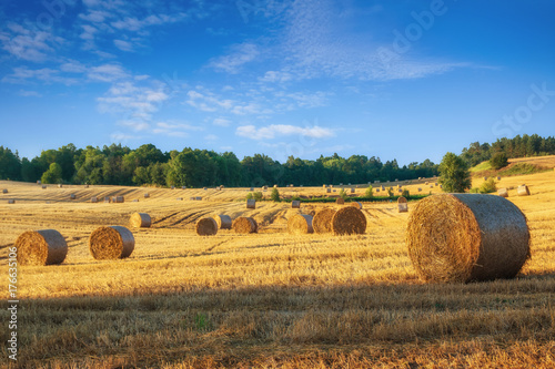 Tuinposter Platteland Haystacks on the field. Summer, rural landscape.