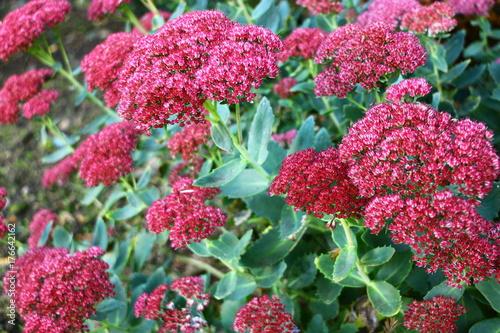 Plakat Kolorowe byliny jesienią