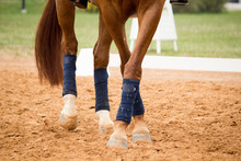 Close Up Of Horse Legs In The ...