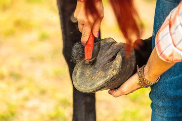 Person cleaning horse hoof with hooves