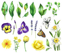 Watercolor Floral Set With Green Leaves, Violet And Yellow Flowers And Butterflies Isolated On White Background.