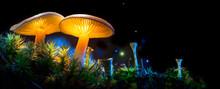 Mushroom. Fantasy Glowing Mush...