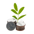 coins, sprout isolated on white background with clipping path. The concept of the growth of money, the success and prosperity of a business growing rapidly