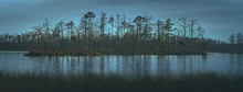 Swamp At Gloomy Weather In Lat...