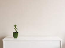 Small Plant In Green Pot On White Sideboard Against Neutral Wall Background With Copy Space To Right