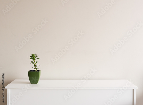 Valokuva  Small plant in green pot on white sideboard against neutral wall background with