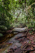 A small stream flowing through a tropical rain forest