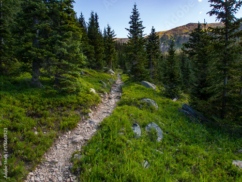 Fotografía  Rocky Trail Through Pine Forest